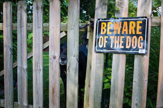 beware of friendly dog