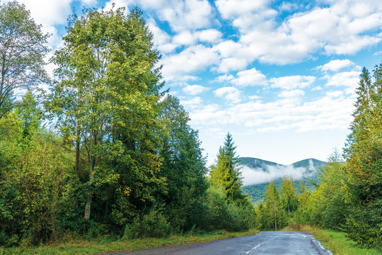 old country road through spruce forest. beautiful transportation morning scenery. fluffy clouds on the azure sky. cracked asphalt and gravel roadside. fog rising above the distant mountain