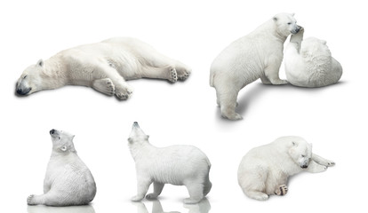 Foto op Aluminium Ijsbeer small polar bear cub is isolated on white background