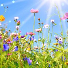 Fototapete - bunte Blumenwiese - Grußkarte Wildblumen Wiese