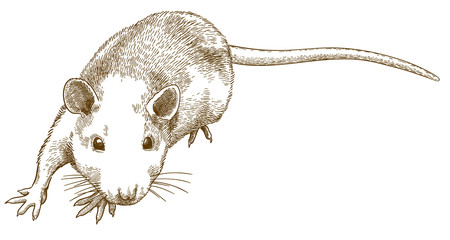 engraving illustration of sneaking mouse
