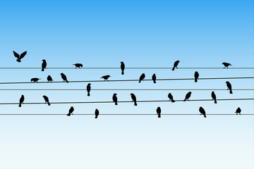 Birds on wires. Vector illustration with silhouette of flock of crows sitting on power lines. Blue pastel background