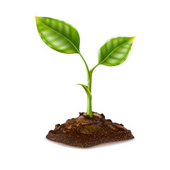 Obraz Vector realistic green seedling grows in soil - fototapety do salonu