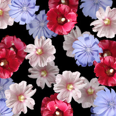 Fototapete - Beautiful floral background of chicory and mallow. Isolated