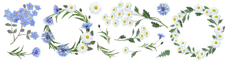 Botanical collection of wildflowers: blue cornflowers, forget-me-nots, flowers, white daisies, leaves, twigs, buds. Flower frame, wreath. Watercolor.