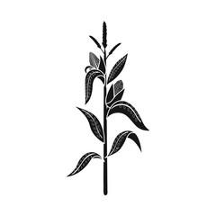 Fototapeta Vector design of corn and stalk logo. Set of corn and field vector icon for stock.