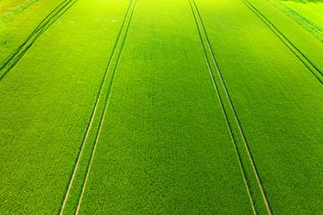 Blick von oben auf ein Getreidefeld im Taunus