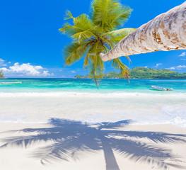 palm tree on the beach , Mahé, Seychelles