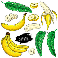 Hand drawn set of banana, slices pieces, bunch and leaves