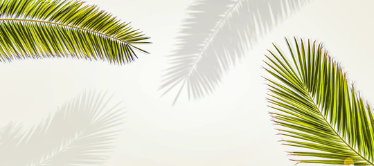Photo sur Plexiglas Palmier Summer coconuts palm leaves and shadow