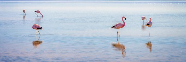 Foto op Canvas Flamingo Andean flamingos in Laguna Chaxa, Atacama salar, Chile
