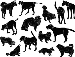 set of fourteen dogs sketches isolated on white