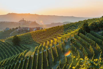 Poster Wijngaard Langhe Region, vineyards at sunset. Serralunga d'Alba, Piedmont, Italy