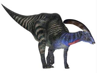 Parasaurolophus Dinosaur - Parasaurolophus with a cranial crest was a herbivorous Hadrosaur dinosaur that lived in North America during the Cretaceous Period.