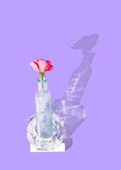 Single Pink Flower in Glass Vase with Shadow Reflection
