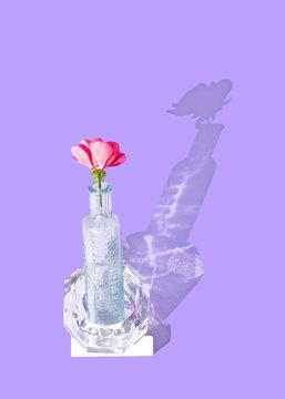 Flower in glass vase