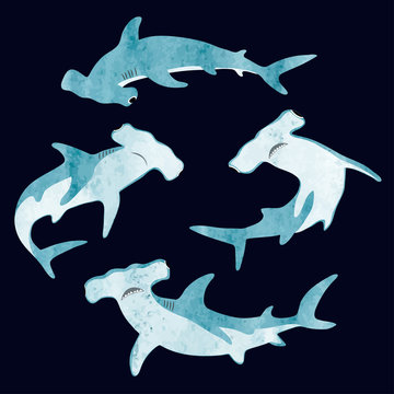 Watercolor hammerhead shark set. Vector illustration.