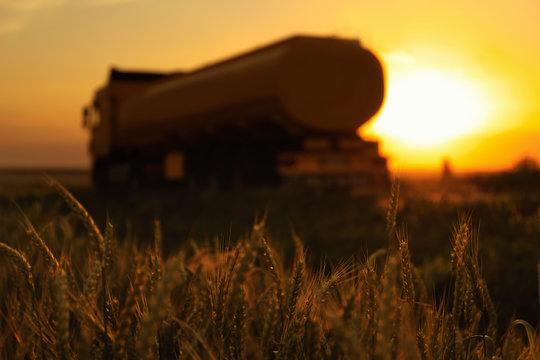 Modern truck near wheat field at sunset, selective focus
