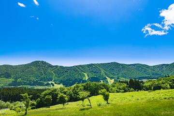 春の高原の新緑と草原