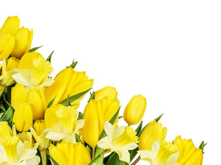 Bouquet of yellow tulips and daffodils isolated on a white background