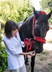alternative medicine for horse