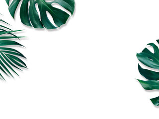 Tropical leaves on white background design of Monstera and Yellow palm with copy space
