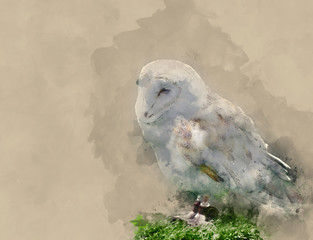 Wall Mural - Digital watercolour painting of Barn owl bird of prey in falconry display