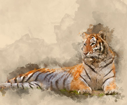 Digital watercolour painting of Beautiful image of tiger relaxing on grassy hill