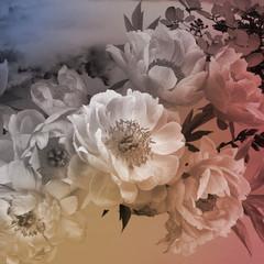 Fotobehang Vintage floral card. Peonies flowers close-up.
