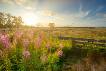 Summertime in a rural countryside landscape with a lush green field, flowerrs and bright sunshine - Drenthe, The Netherlands