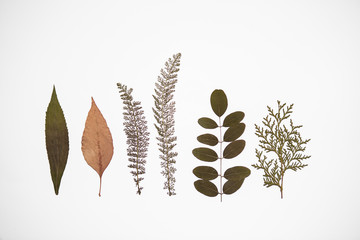 six different dry plants on white background