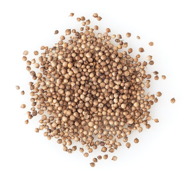 Heap of dried coriander seeds isolated on white background
