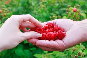 Woman taking fresh raspberries from her man's hand.