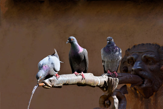 Pigeons sit on the water dispenser of a fountain and drink water. Some wait until their turn.
