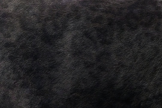 Black panther skin texture background