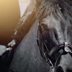 Eye sports horse.The muzzle is sports stallion in the bridle.