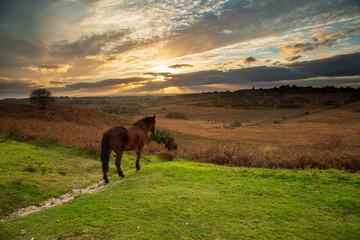 Horse Watching the Sun Set Fototapete