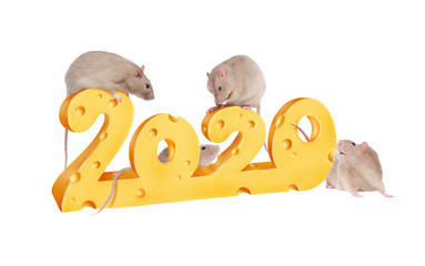 2020 numbers made of cheese with rats playing on them