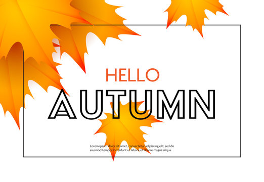 Hello autumn poster design with orange maple foliage. Text in frame with yellow fall leaves isolated on white. Vector illustration can be used for banners, brochures, greeting cards