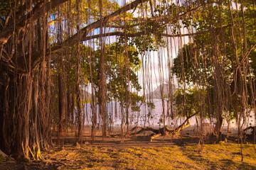 Arbre tropical île maurice