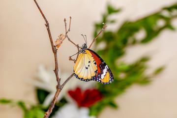 Closeup   beautiful butterflies sitting on flower.