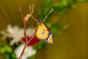 Closeup   beautiful butterfly sitting on flower.