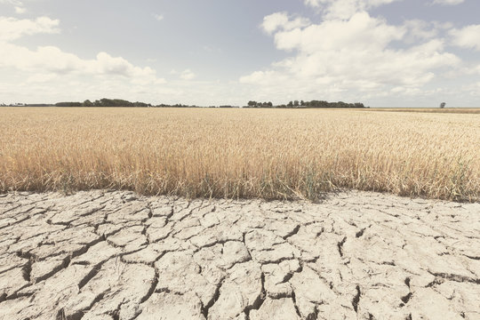 Dry and arid land with failed crops due to climate change and global warming.