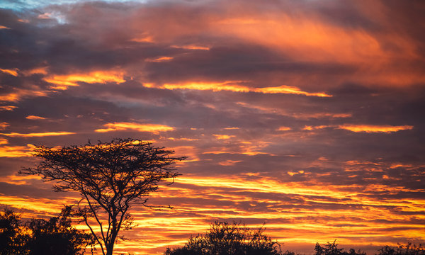 Amazing vibrant golden clouds of sunset sky above silhouette of dry trees in Ethiopia