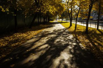 Yellow fallen leaves on the asphalt path among yellow trees