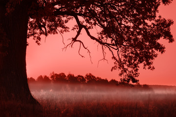 Papiers peints Bordeaux Silhouette of alone oak over pink sunset. Living Coral color of the year 2019 toned image