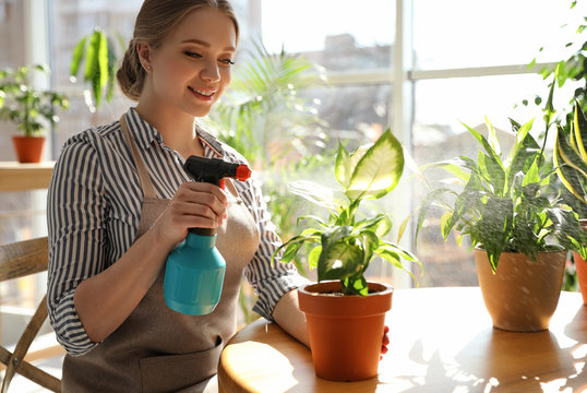 Young beautiful woman taking care of home plants at table indoors, space for text