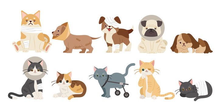 injured cartoon dogs and cats