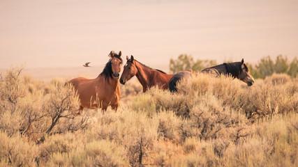 Three wild horses in the vast Utah desert in the western United States