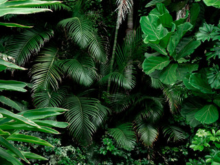 Tropical Rainforest Landscape background. Tropical jungle palms, trees and plants